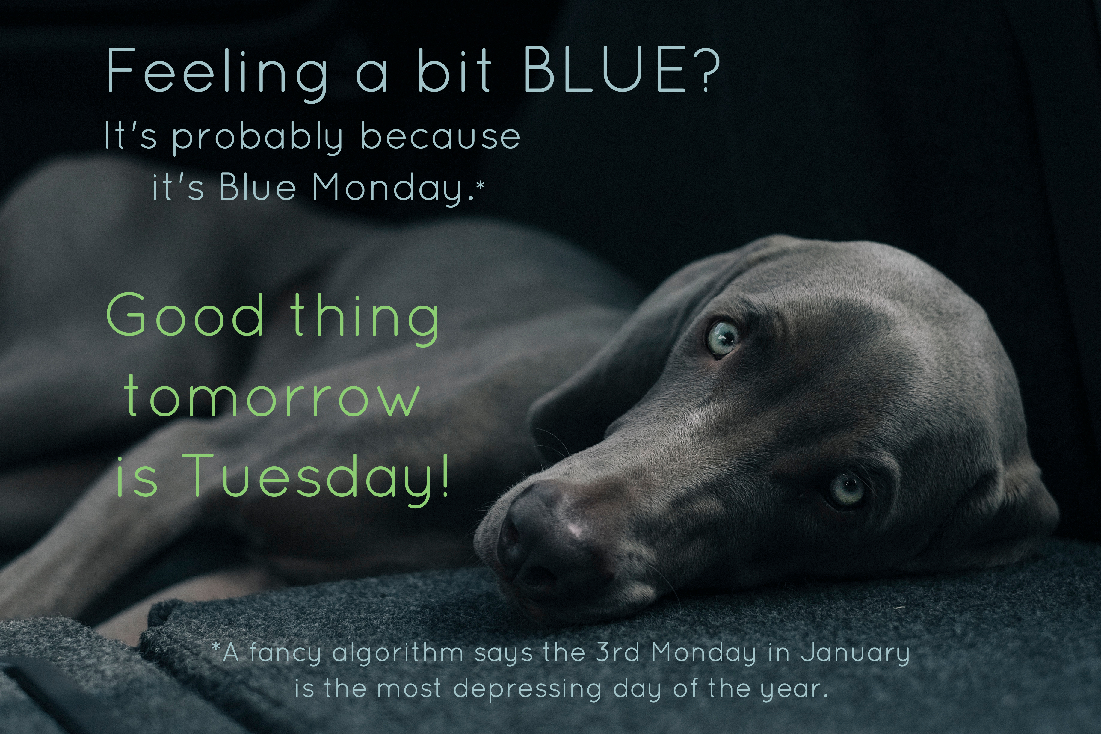 Feeling a bit BLUE? It's probably because it's Blue Monday. (A fancy algorithm says the 3rd Monday in January is the most depressing day of the year.) Good thing tomorrow is Tuesday!